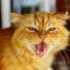 Член клуба Пластик Клуб Red_Cat